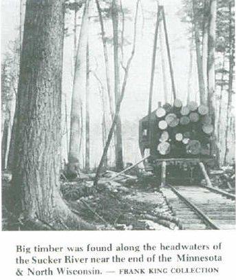 sucker rivers forest