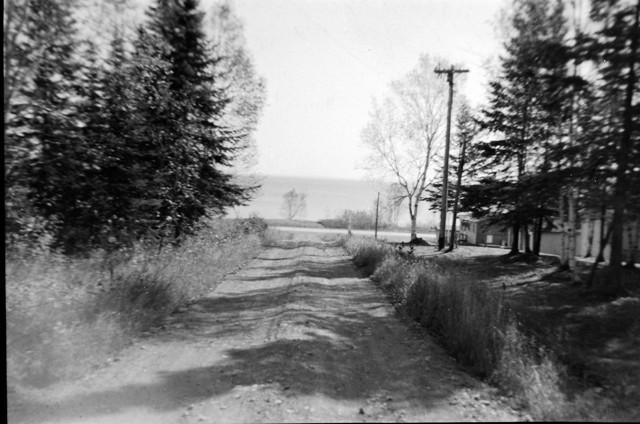 Pine Tree Road